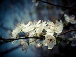 Фото бесплатно ветка, цветы, цветение