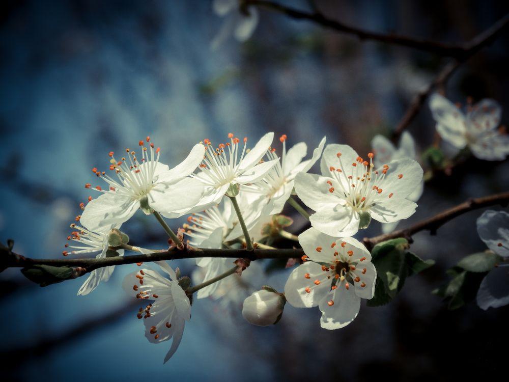 Обои ветка, цветы, цветение картинки на телефон