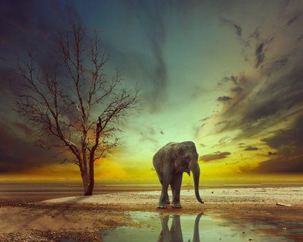 Фото бесплатно слон, фотошоп, арт