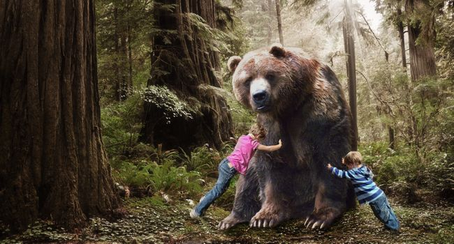 Photo free bear, children, forest