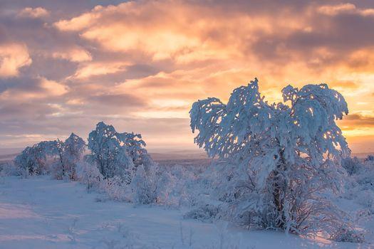 Фото бесплатно Finland, Lapland, Финляндия, Лапландия, зима, снег, деревья, закат, пейзаж