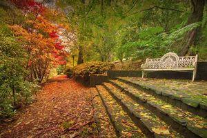 Бесплатные фото осень,парк,лес,деревья,дорога,ступени,лавочка
