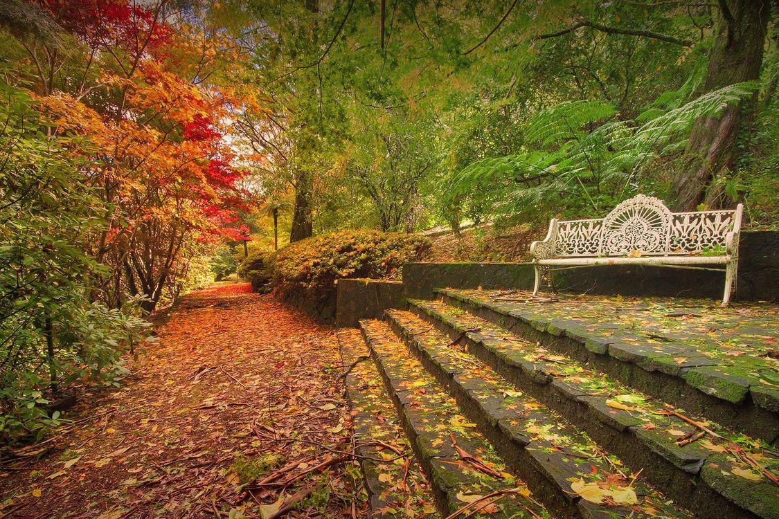 Фото бесплатно осень, деревья, магазин - на рабочий стол