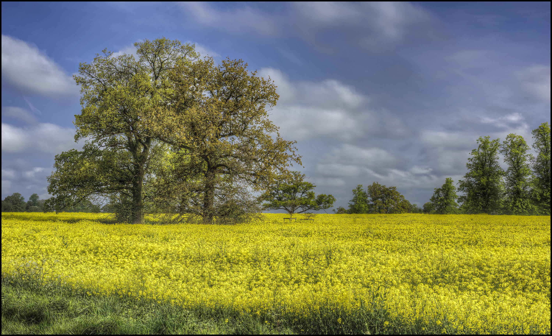 обои поле, цветы, деревья, пейзаж картинки фото