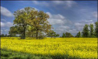 Фото бесплатно поле, цветы, деревья