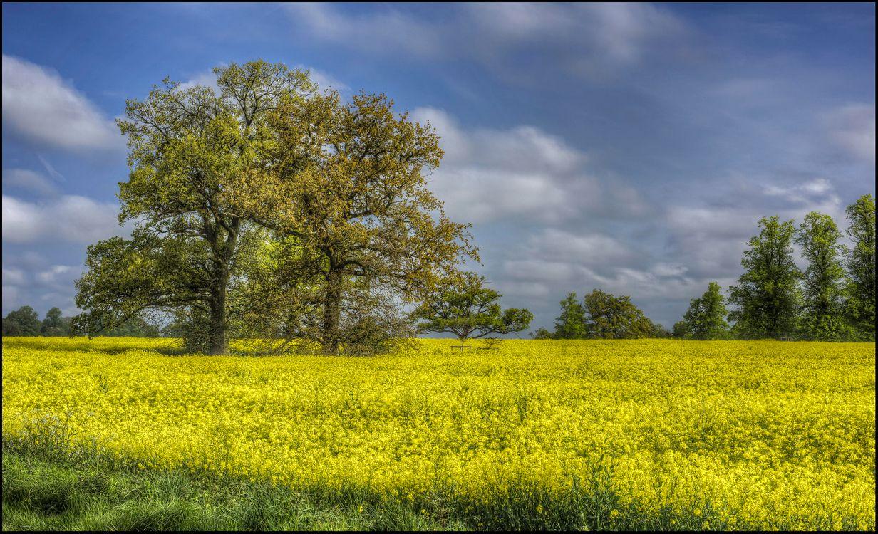 Фото бесплатно поле, цветы, деревья, пейзаж, пейзажи