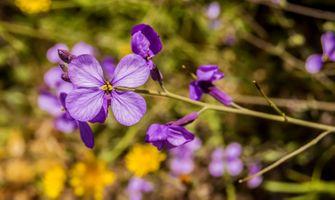 Заставки растение, цветок, пурпурный