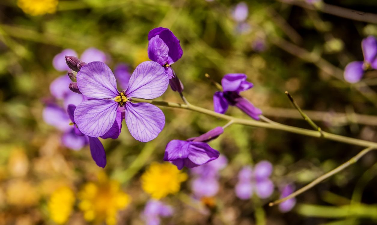 Photos for free plant, flower, purple - to the desktop