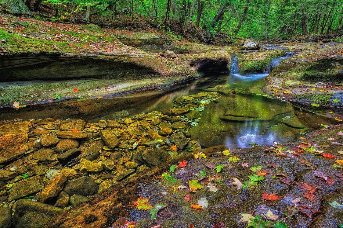 Фото бесплатно Ricketts Glen State Park, Pennsylvania, Риккетс Глен Стейт Парк, лес, скалы, речка, деревья, природа осень, ручей, природа, природа