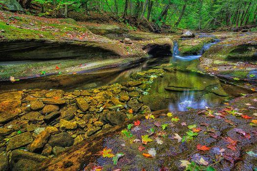 Бесплатные фото Ricketts Glen State Park,Pennsylvania,Риккетс Глен Стейт Парк,лес,скалы,речка,деревья,природа осень,ручей,природа