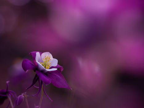 Photo free macro, flower, background