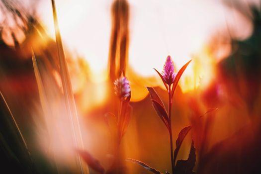 Фото бесплатно Flowers, природа