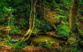 Скачать заставку лес, водопад, скалы на телефон бесплатно