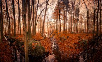Бесплатные фото осень,лес,деревья,канава,канал,водоём,туман