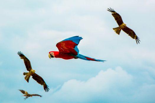 Photo free flight, Macaw, sky
