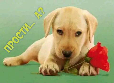 Postcard free sorry, puppy with flower, cute puppy