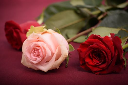 Три прекрасных розы