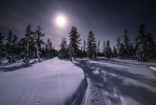 Фото бесплатно Луна, деревья, природа