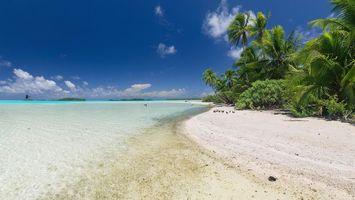 Бесплатные фото Атолл Рангироа,Французская Полинезия,море,берег,пляж,пальмы,пейзаж