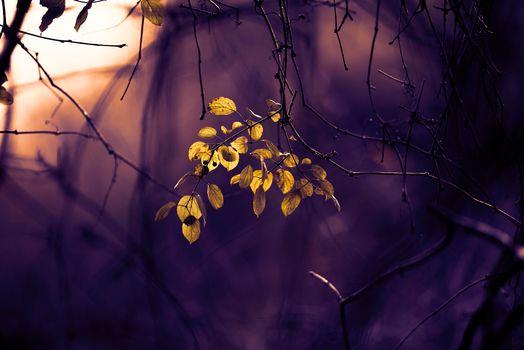 Photo free autumn, branch, macro