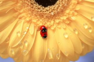 Pictures on prompt macro, ladybug for free