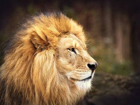 Фото бесплатно лев, король, вид в профиль