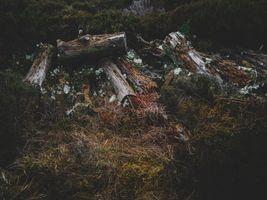 Бесплатные фото бревна, трава, мох, logs, grass, moss