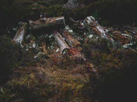 Фото бесплатно бревна, трава, мох