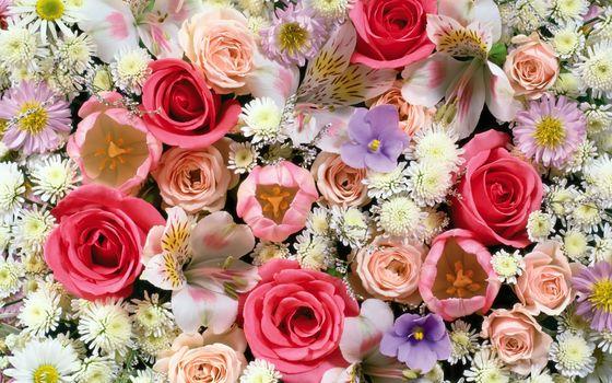 Фото бесплатно роза, белый цветок, красный цветок