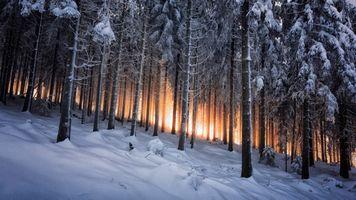 Фото бесплатно зима, пейзаж, лес, снег, сугробы