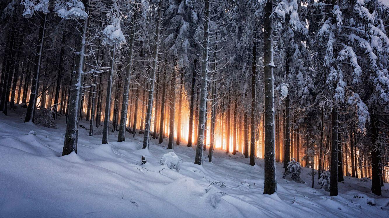 Фото бесплатно зима, пейзаж, лес, снег, сугробы - на рабочий стол