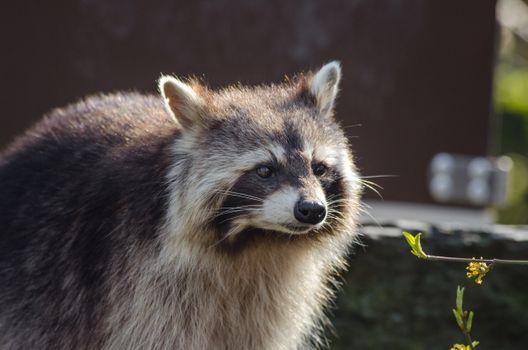 Фото бесплатно дикая природа, млекопитающее, фауна