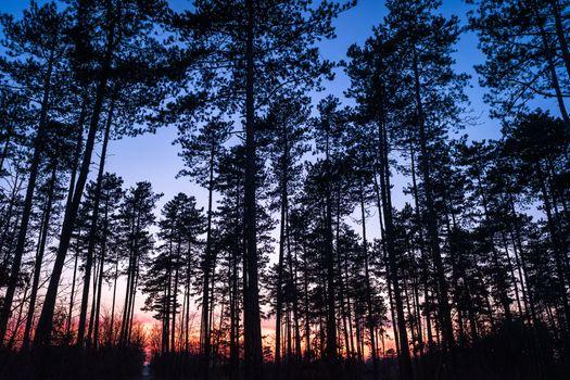 Заставки закат, лес, силуэты