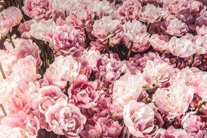 Заставки цветы, много, розовые