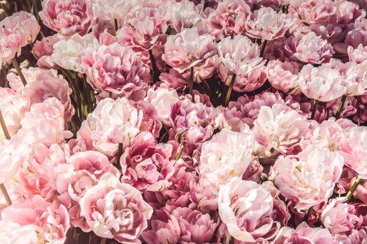 Фото бесплатно цветы, много, розовые