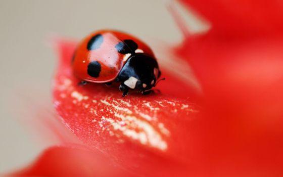 Photo free ladybug, artistic, macro