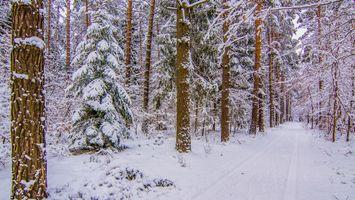 Фото бесплатно зима, снег, лес