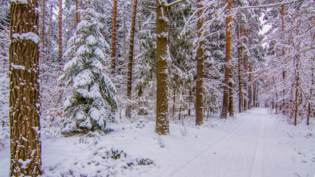 Photo free winter, landscapes, snow in the forest