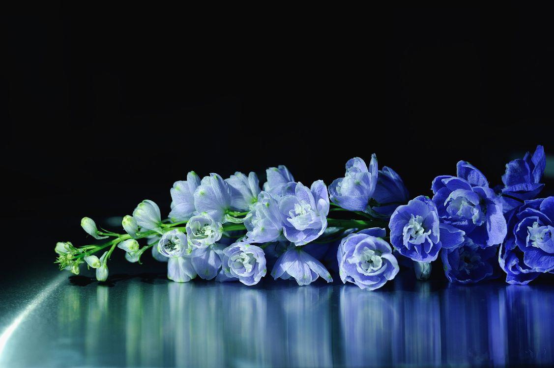 Фото бесплатно цветы, букет, макро - на рабочий стол