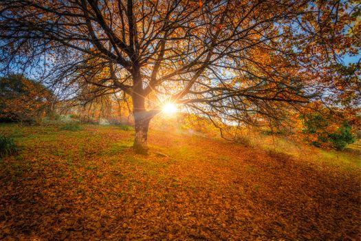 Фото бесплатно Mount Lofty Botanic Gardens, осень, холм