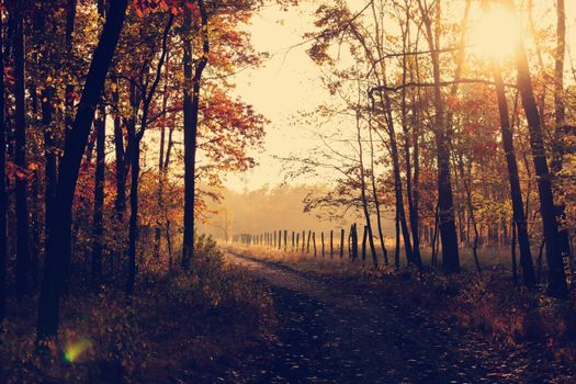 Photo free sunbeam, autumn, nature