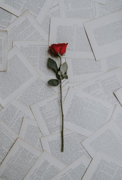 Обои розы, книги, тексты картинки на телефон