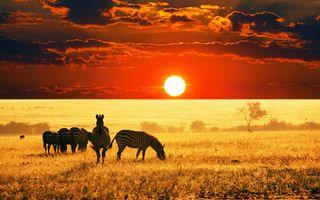 Фото бесплатно зебры, природа дикая, африканская саванна