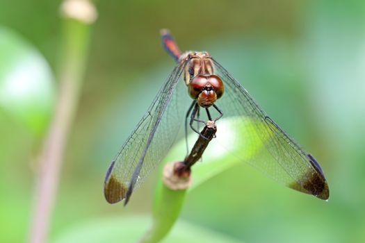 Фото бесплатно животное, насекомые, крылья