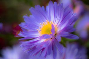 Фото бесплатно цветочная композиция, цветы, цветок, флора