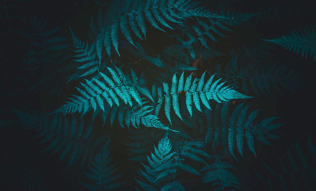 Free photo fern, plant, leaves - to desktop