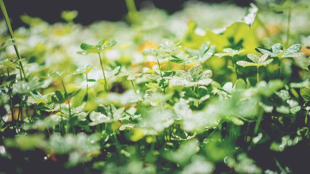 Фото бесплатно клевер, наземное растение, цветок