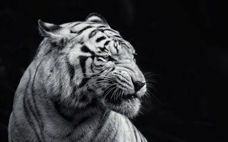 Фото бесплатно белый, черный, животные