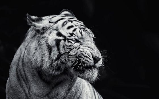 Photo free white, black, animals