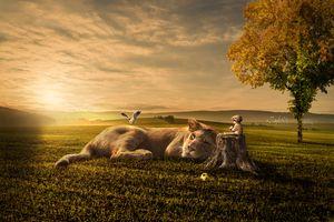 Бесплатные фото закат солнца,поле,лев,львица,мальчик,ребёнок,пень